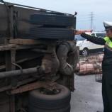 Truk Terguling di Tol Gempol, Belasan Babi Berhamburan dan Beberapa Kabur